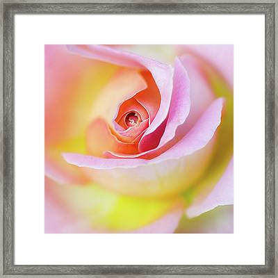 Rose Pink Petals And Drops Framed Print by Julie Palencia