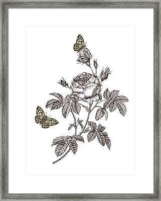 Rose Placement Framed Print by Stephanie Davies
