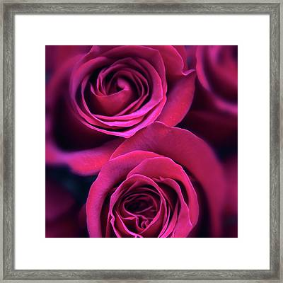 Rose Rapture Framed Print by Jessica Jenney