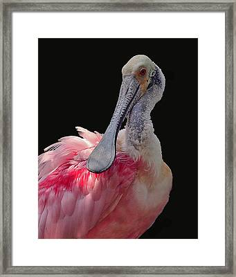 Roseate Spoonbill Framed Print by Larry Linton