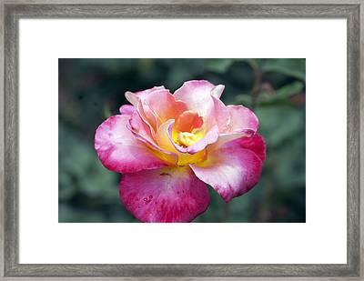 Rosebud Framed Print by Don  Wright