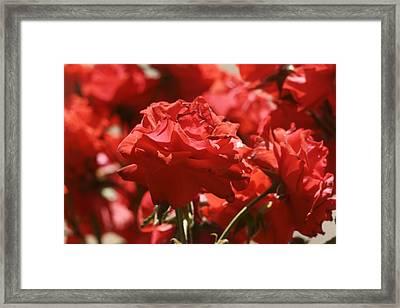 Roses 3 Framed Print by Dimitry Papkov