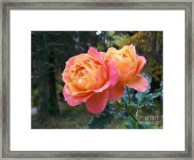 Roses In The Woods Framed Print by Mary Ann Weger