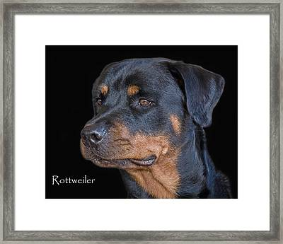 Rottweiler Framed Print by Larry Linton