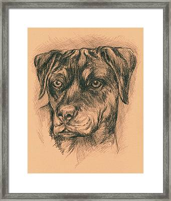 Rottweiler Mix In Charcoal Framed Print by MM Anderson