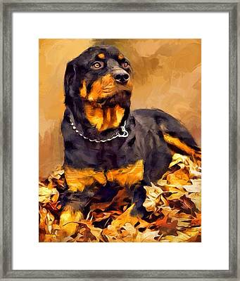 Rottweiler Portrait Framed Print by Scott Wallace