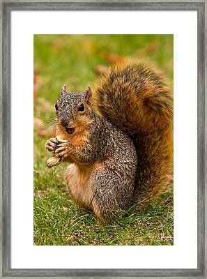 Rough Around The Edges  Framed Print by James Marvin Phelps