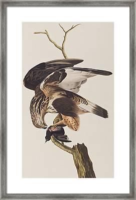 Rough Legged Falcon Framed Print by John James Audubon