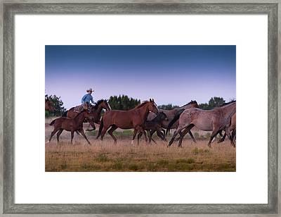 Round Up At Dawn Framed Print by Steve Gadomski