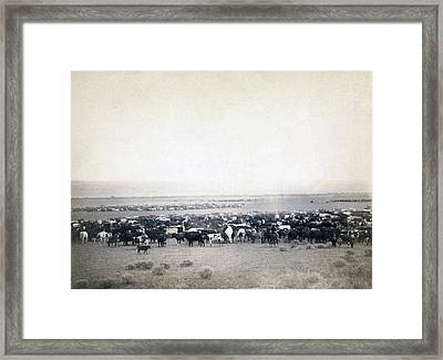 Round-up At Moss Agate, Dakota Framed Print by Everett