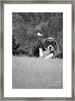 Round Up Framed Print by Susan Herber
