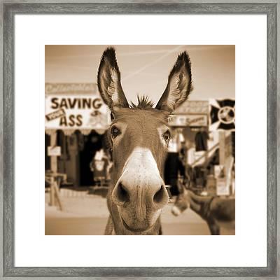 Route 66 - Oatman Donkeys Framed Print by Mike McGlothlen