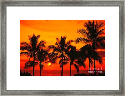 Row Of Palms Framed Print by Bill Schildge - Printscapes