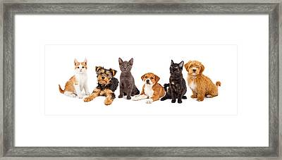 Row Of Puppies And Kittens Framed Print by Susan  Schmitz