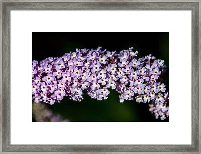 Rows And Flows Of Angel Flowers Framed Print by John Haldane