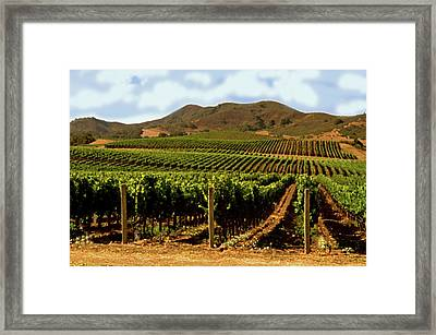 Rows Of Grape Vines Framed Print by Gary Brandes