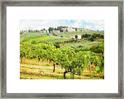 Rows Of Grapes In Tuscany Italy Vineyard Framed Print by Susan Schmitz