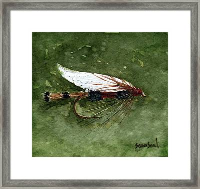 Royal Coachman Wet Fly Framed Print by Sean Seal