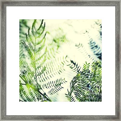 Royal Poinciana Tree Leaves - Hipster Photo Square Framed Print by Charmian Vistaunet