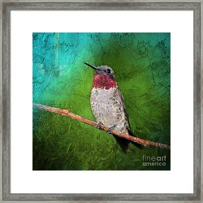 Ruby Throated Hummingbird Framed Print by Betty LaRue