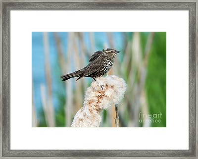 Ruffled Feathers Framed Print by Mike Dawson