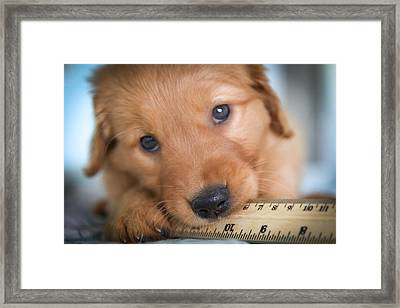 Ruler Of My Heart Framed Print by Karen Wiles