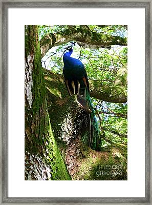 Ruler Of The Roost Framed Print by Mary Deal