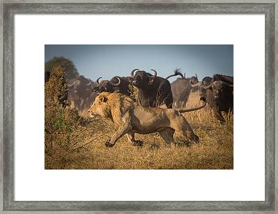 Running For His Life Framed Print by Marc Meijlaers