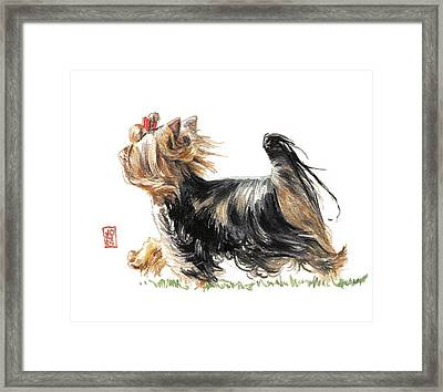 Running Yorkie Framed Print by Debra Jones
