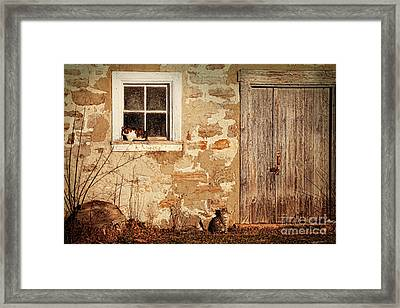 Rural Barn With Cats Laying In The Sun  Framed Print by Sandra Cunningham