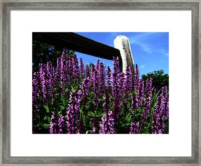 Rural Flower Garden Framed Print by Scott Hovind