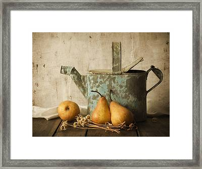 Rustica Framed Print by Amy Weiss