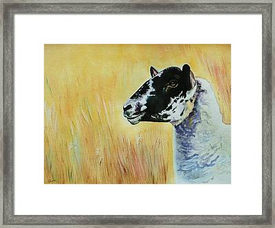 Rutland Sheep  Framed Print by Lucy Deane