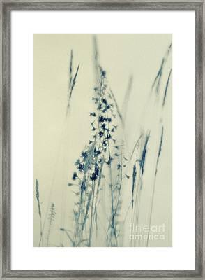 s Framed Print by Priska Wettstein