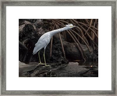 S-t-r-e-t-c-h Framed Print by Debra Larabee