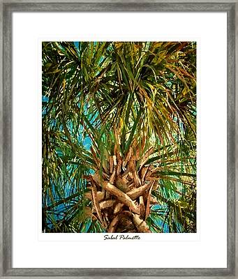 Sabal Palmetto Framed Print by Eddie Glass