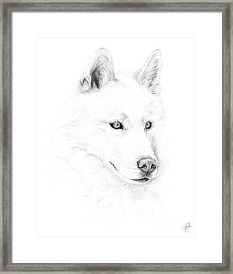 Saber A Siberian Husky Framed Print by Stacey May