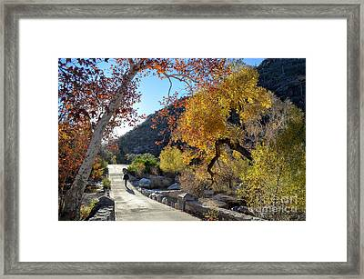 Bridge And Fall Colors At Sabino Canyon Framed Print by Rincon Road Photography By Ben Petersen