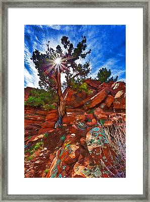 Sacred Ground - Shaman's Dome Juniper Framed Print by Bill Caldwell -        ABeautifulSky Photography