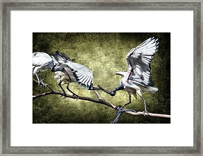 Sacred Ibis Photobombing D0164 Framed Print by Wes and Dotty Weber