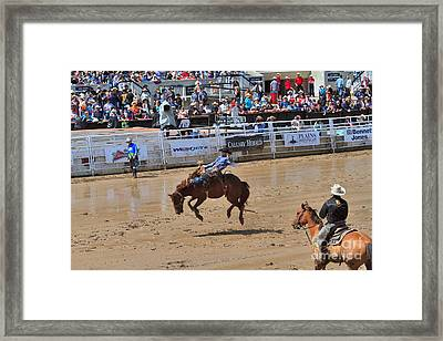 Saddle Bronc Riding Event At The Calgary Stampede Framed Print by Louise Heusinkveld