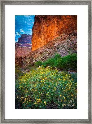 Saddle Canyon Flowers Framed Print by Inge Johnsson