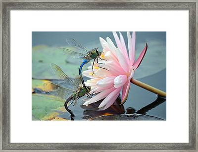 Safe Place To Land Framed Print by Fraida Gutovich
