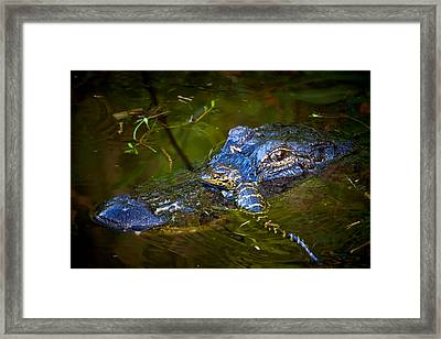 Safe With Mom Framed Print by Mark Andrew Thomas