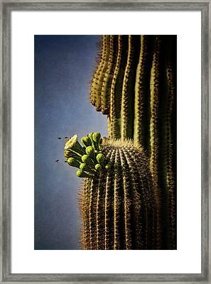 Saguaro Cactus And The Bees  Framed Print by Saija Lehtonen