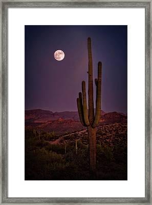 Saguaro Moonlight  Framed Print by Saija Lehtonen
