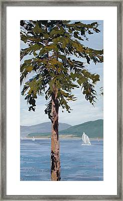 Sail Away Framed Print by Mary Giacomini