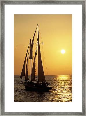 Sailboat Sailing In Golden Sunset Light, Miami, Fl Framed Print by Hisham Ibrahim