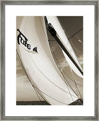 Sailboat Sails And Spinnaker Fate Beneteau 49 Charelston Sc Framed Print by Dustin K Ryan