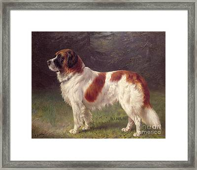 Saint Bernard Framed Print by Heinrich Sperling